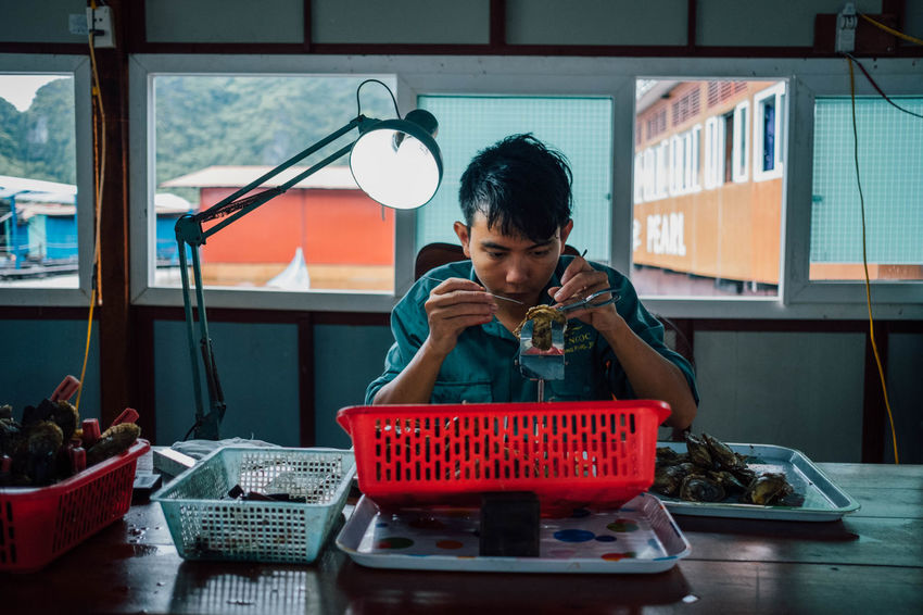 At the oyster farm. Man At Work Seafood Worker Asian Food Casual Clothing Communication Craftsmanship  Day Freshness Front View Indoors  Lifestyles Occupation One Person Oyster  Real People Shell Technology Young Adult