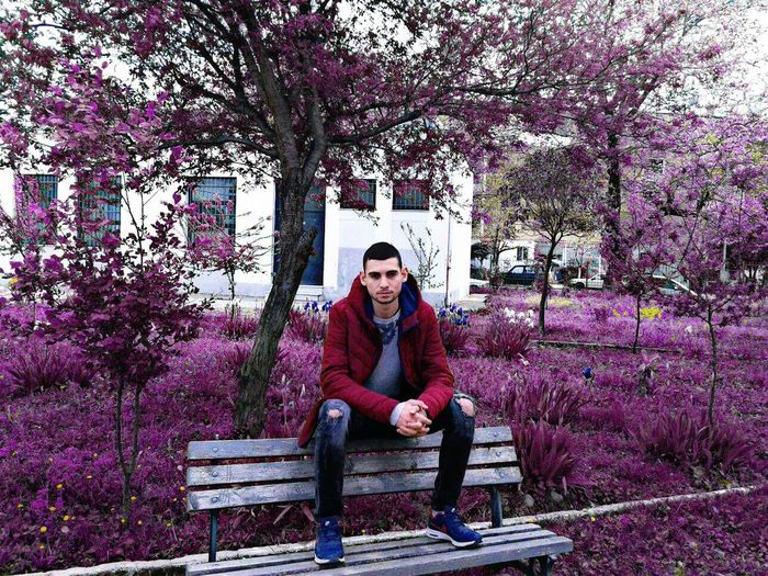 Photo by @alvaroalvyofficial Sitting Full Length One Person Looking At Camera Bench Front View Portrait Adults Only Lifestyles Young Adult Tree Flower Young Women Outdoors Real People Nature People Adult Day City EyeEmNewHere Pain Men Jeans Purple Millennial Pink Millennial Pink Millennial Pink
