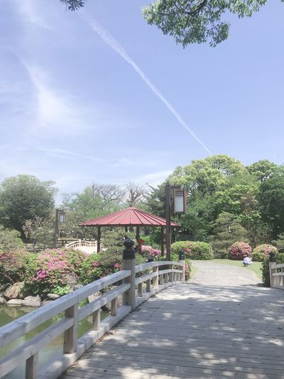 大村公園 Plant Sky