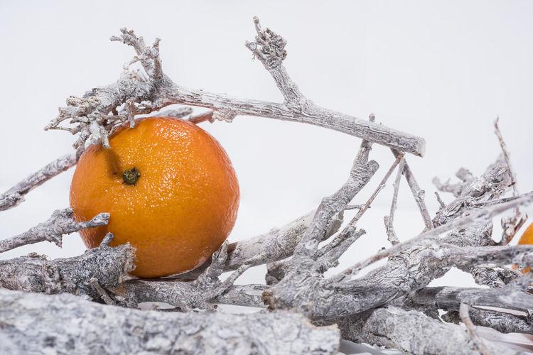 Fruit Food Cold