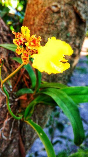 Flower Nature Fragility Orquídea❤ Photography