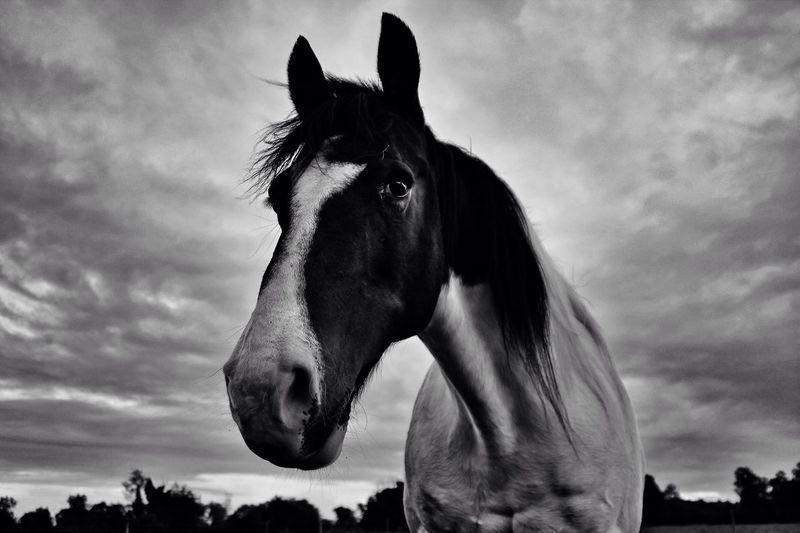 Hawkeye on Blackandwhite Friday. EyeEm Nature Lover Tadaa Community Learn & Shoot: Simplicity Horse Love