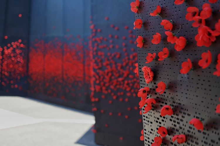 Close up of red poppies on a memorial