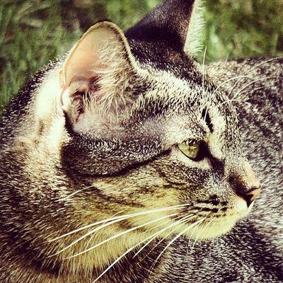 Itzi!!!! Igersitzi Igerscats Igersanimals Igerstobago alpha6000 nomasfotos yatevale negugoring