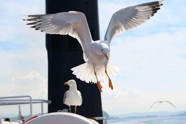 Seagulls on ship against sky