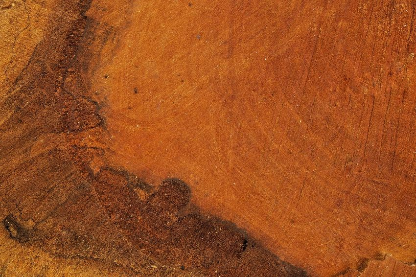 Wooden log Backgrounds Textured  Nature Space Empty Blank Pattern Copy Space Wooden Log Wooden Outdoors Brown Textured  Close-up