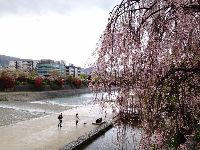 Cherry Blossoms Kyoto Water_collection Cloud And Sky