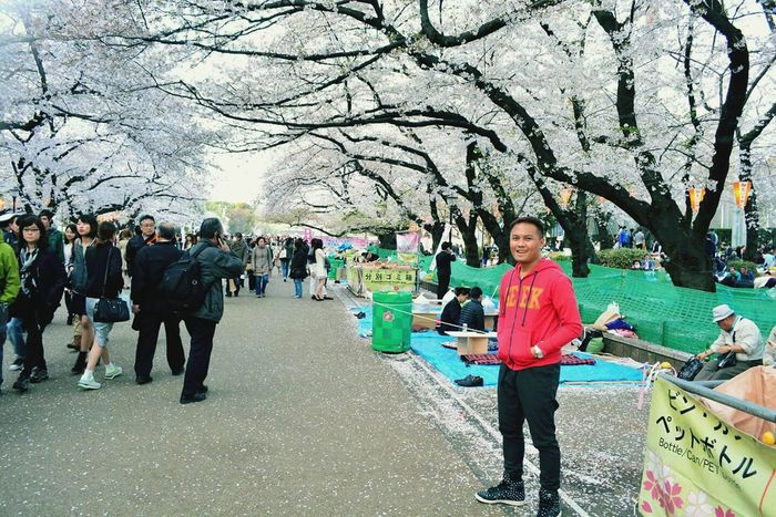 Nature_collection Springtime Faces Of Summer Ueno Park Sakura2015 Japan Sakuraflowers