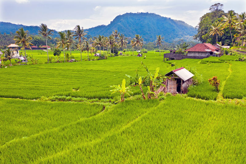 Scenic view of agricultural field by houses and mountains