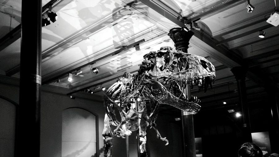 Day 187 - Naturkunde Museum Berlin Blackandwhite Dinosaur TRex  Museum 365project 365florianmski Day187