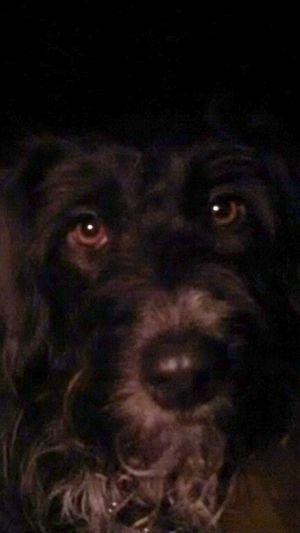 Something I Love Dog Portrait Things I Like Dogs Doglover Things I Like Animals