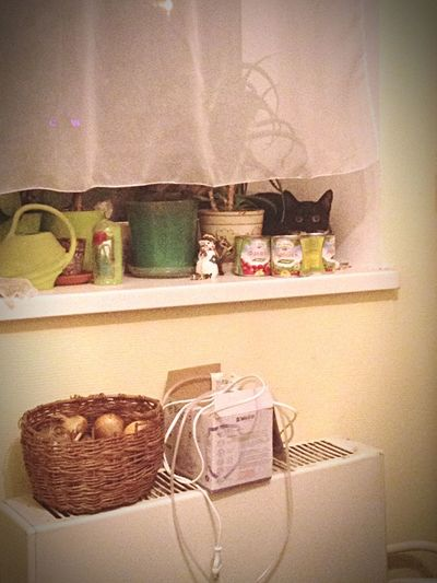 The Watch Pets Watch Spy Black Cat Stalker Cat Where Is A Cat? Container Shelf Variation Basket Still Life