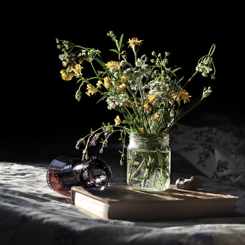 STILL LIFE Close-up Day Flower Flower Head Fragility Freshness Indoors  Nature No People Studio Shot Vase
