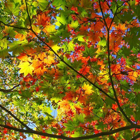 Autumn Autumn Colors Autumn Leaves EyeEm Nature Lover EyeEm Best Shots Nature_collection