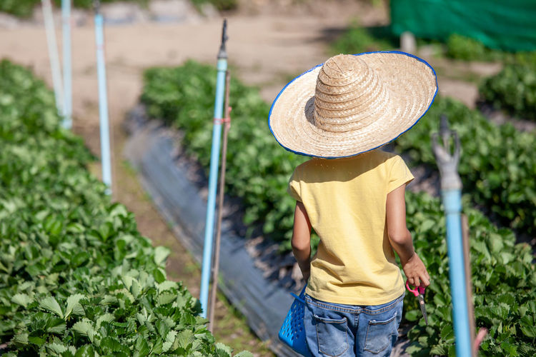 Rear view of cute girl standing in farm