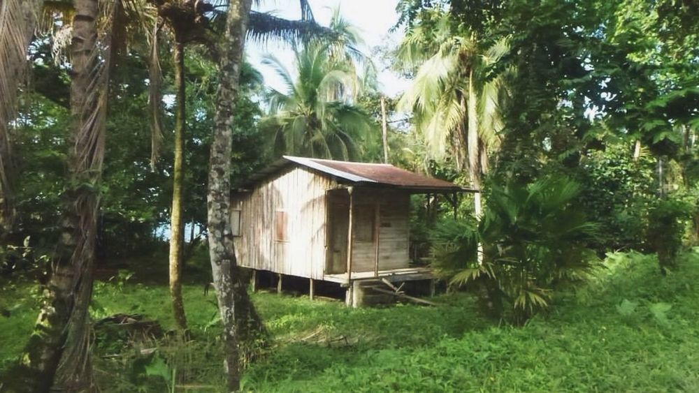 Litlle house in the forest - absolute tranquility ✌🏼 Tree Forest Tree Trunk Tranquil Scene Growth Tranquility Solitude Scenics Green Color Branch WoodLand Non-urban Scene Day Nature Remote Outdoors Beauty In Nature No People Countryside Lush Foliage Costa Rica Cahuita