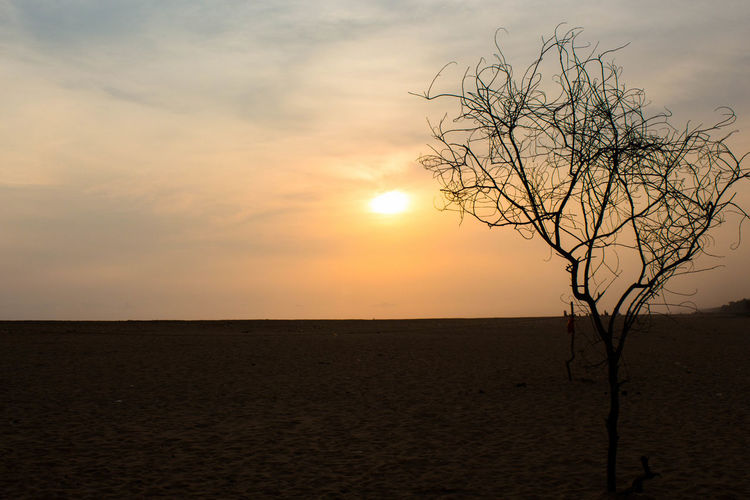 evening Beach Bare Tree Beauty In Nature Day Evening Evening Light Evening Sky Landscape Lone Nature Night No People Orange Orange Color Orange Sky Outdoors Poovar Poovar Beach Remote Scenics Sky Sun Sunset Tranquil Scene Tranquility Tree