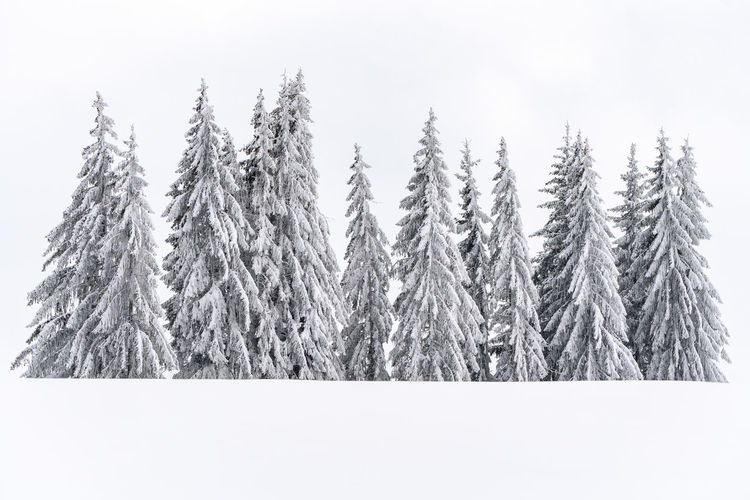 Fresh snow in nature. Nature Growth No People Tranquility Snow Beauty In Nature Cold Temperature Sky Day Winter Tranquil Scene Environment Scenics - Nature Landscape Outdoors Winter Fresh Snow Romania First Eyeem Photo Winter Scene Big Trees Trees White Background