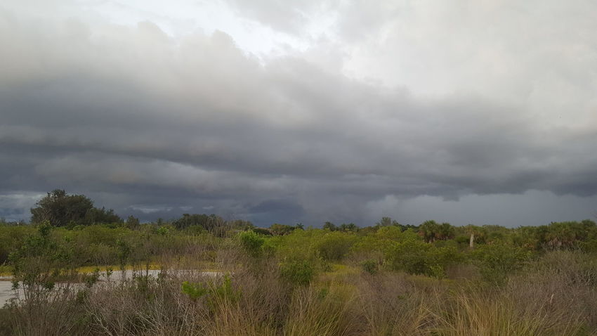 Storm clouds rolling in Stormy Weather Storm Clouds Florida Life Florida Afternoon Florida Summertime Dark Clouds Bradenton FL Robinson Preserve