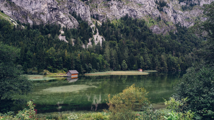 Lake Alps Alps Austria Tree Water Mountain Reflection Day Scenics - Nature Green Color Nature Outdoors Forrest