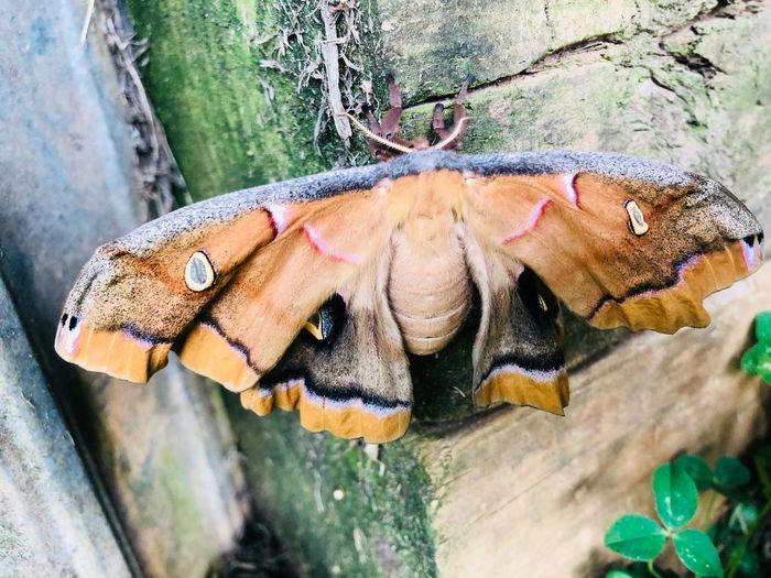 Beautiful moth that has just formed and is opening up for the first time. Butterfly - Insect Moth Life Close-up Nature Animal Day Animals In The Wild No People Insect Beauty In Nature Animal Wing