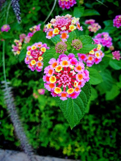 Taking Photos Eyem Nature Lovers  Nature Flowers