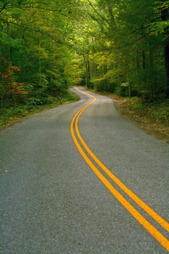 Asphalt Beauty In Nature Country Road Day Diminishing Perspective Double Yellow Line Empty Road Great Smoky Mountains National Park Landscape Long No People Road Road Marking Roadway Tennessee The Way Forward Tranquil Scene Transportation Tree Vanishing Point