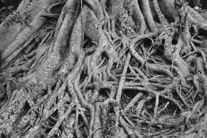 Backgrounds Blackandwhite Photography Close Up Photography Close-up Complexity Day Full Frame Nature No People Outdoors Roots Of Life Roots Of Tree