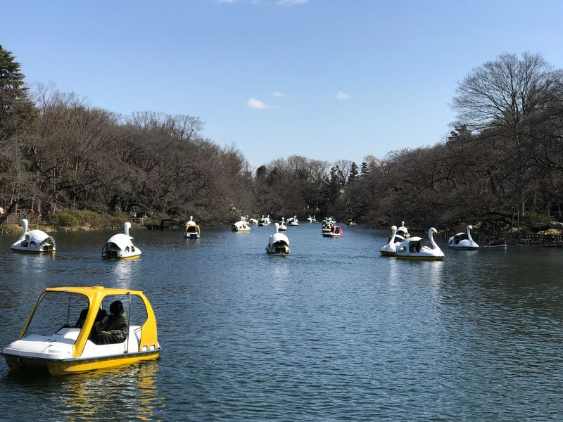 Japan Kichijoji Tree Nautical Vessel Water Boat Nature Transportation Sky Mode Of Transport Day Waterfront Outdoors Swan Bare Tree Lake Beauty In Nature No People Pedal Boat Vacations Moored Sailing