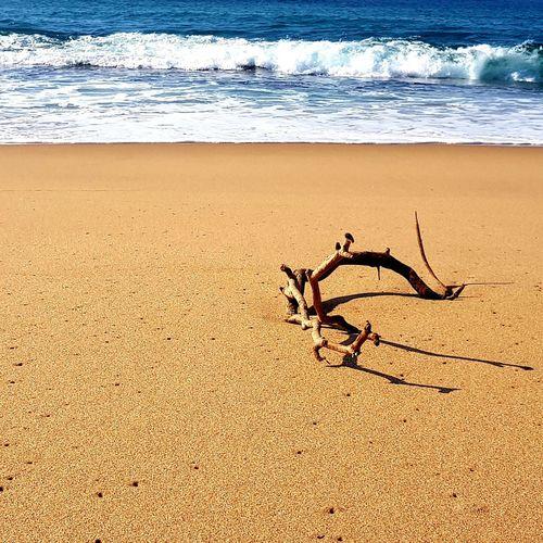 Driftwood Sea