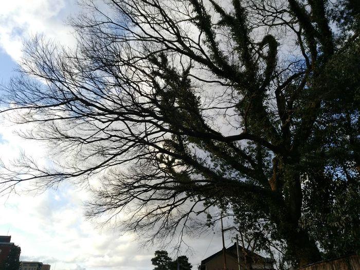 金沢市を歩くシリーズ 夕方の空 EyeEmNewHere Winterscenery Japan Photography 金沢 Landscape Walk Around Kanazawa City,Japan Evening Sky Low Angle View Tree Sky Day Nature Branch Outdoors Growth Beauty In Nature No People