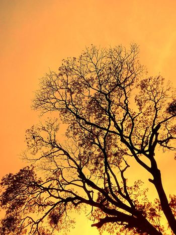 Beauty Of Nature Yellow Color Yellow Tones Nature Tree Silhouette Sunset Sky