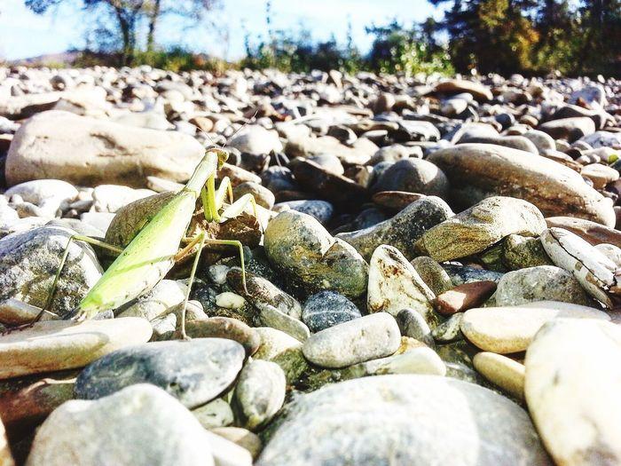 Beautiful Nature Mantereligieuse Galet Wonderful Photography Outdoors