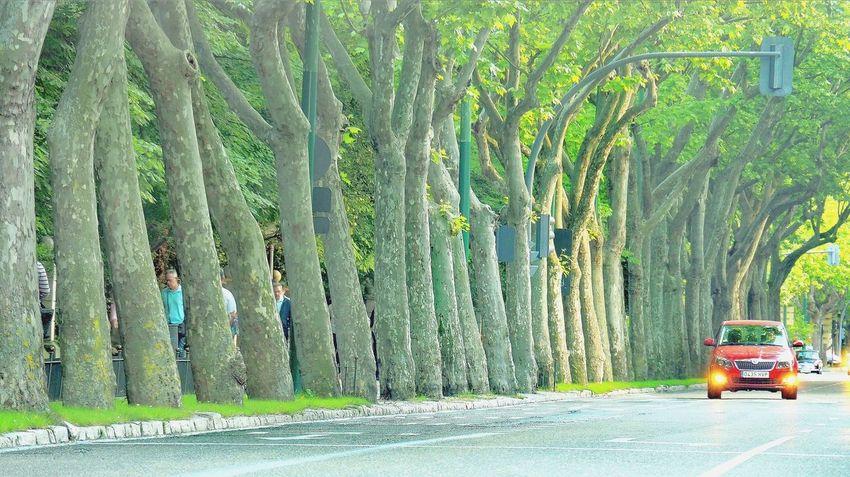 Paseo Zorrilla Valladolid🇪🇸 The Street Photographer - 2017 EyeEm Awards Outdoors Day Green Color Growth Tree No People Nature The Week Of Eyeem Eyeem Market Art Is Everywhere Eyeem Photography Eyem Gallery Green Leaf Plant Tree Spain🇪🇸 EyeEm Selects