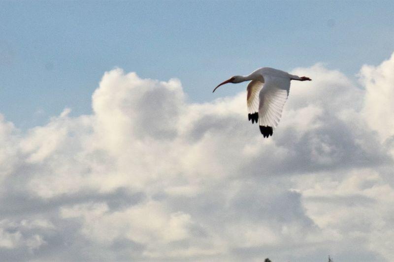 Flight of the