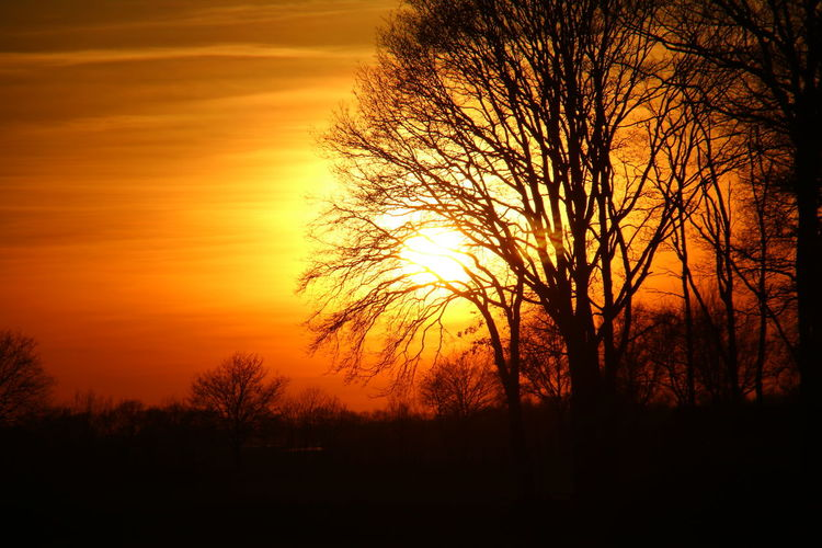 Sunset Nature Trees Light And Shadow Naturelovers Nature Photography Nature_collection Darkness And Light Streamzoofamily EyeEm Gallery EyeEm Best Shots Orange