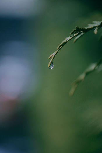 Close-up of water drop on plant