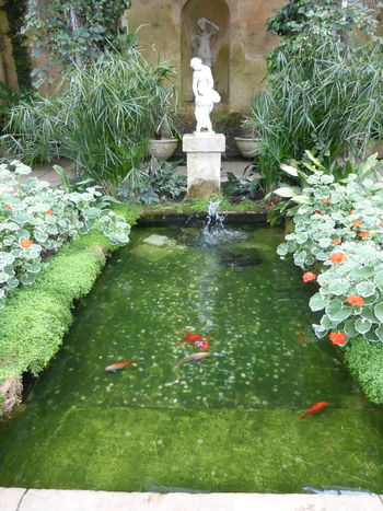 Coins Fish Goldfish Green Color Plant Pond Statue Wishing
