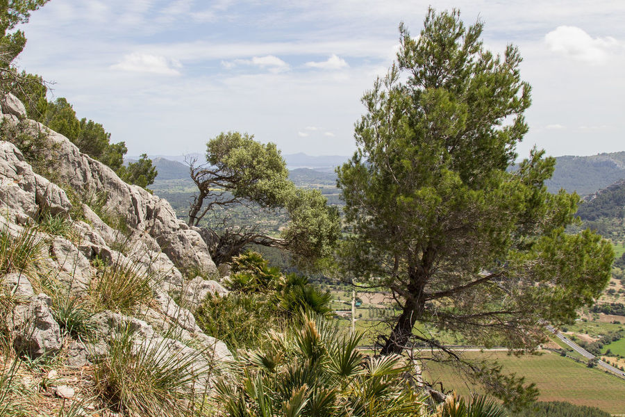 Baleares Hiking Landscape Mallorca Nature Tourism Tree Trees Perspectives On Nature