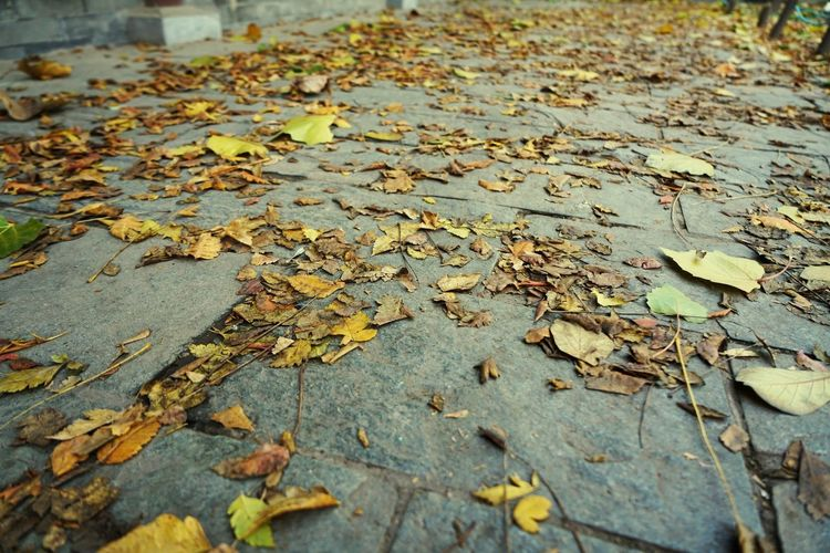High angle view of dried leaves on footpath