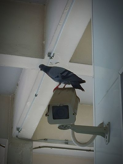 Bird and Closed circuit camera Birds🐦⛅ Closed Circuit Camera Architecture Close-up