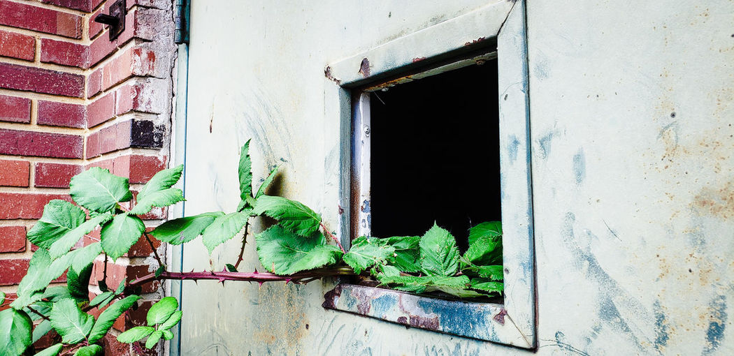 Urbex Ivy Window Door Close-up Architecture Building Exterior Built Structure Plant Creeper Plant Deterioration Worn Out Rusty Ruined Run-down Bad Condition Damaged Abandoned Decline Peeling Off Creeper Entryway Weathered Discarded Peeled Obsolete Civilization