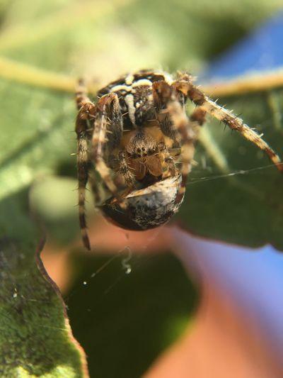 Close-up of spider hunted ladybug