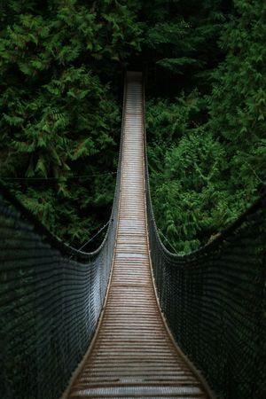 Adventure Outdoors Green Wood Rope Bridge Suspension Bridge Outdoors The Way Forward Travel Destinations Day Bridge - Man Made Structure No People Nature Forest Tree Beauty In Nature Be. Ready.