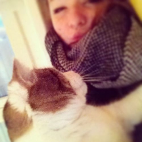 I Love My Cat One Love