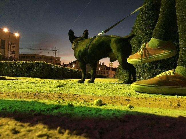 Photographie  Photography Pics Bruxelles Belgium. Belgique. Belgie. Belgien. Etc. Brussels Dogs Dog Chien Yoda Montdesarts Taking Photos Enjoying Life Architecture Photographer Pictureoftheday Colors Street Urbanphotography
