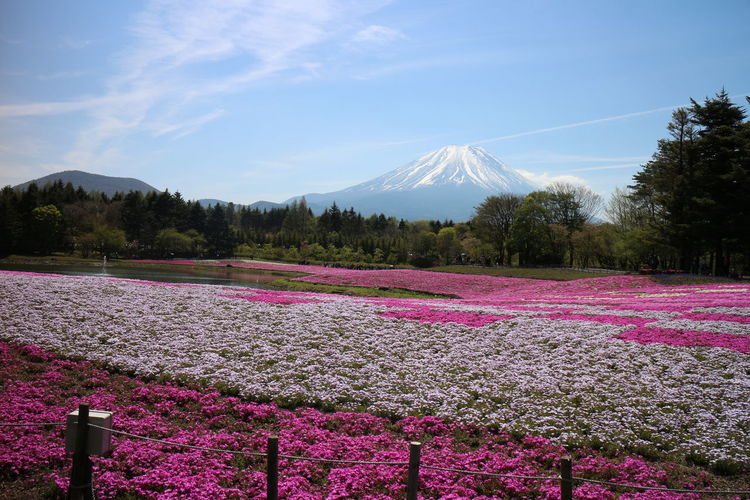 Scenic view of pink and purple flowers on field against sky