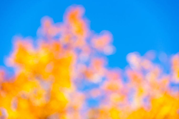 Colors of Autumn Blue Yellow Abstract Sky Backgrounds Nature Clear Sky Blue Background Colored Background Abstract Backgrounds Vibrant Color Soft Focus Softness Autumn Fall