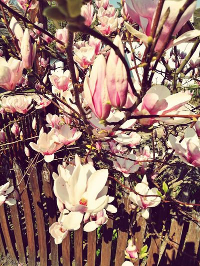 Flower Beauty In Nature Growth Pink Color Freshness Blossom Fragility Springtime No People Tree Petal Branch Flower Head Nature Outdoors Close-up EyeEm Nature Lover Spring Has Arrived Spring Flowers EyEmNewHere