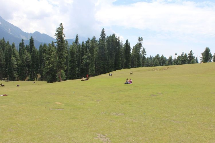 India Beautiful India Beautiful Nature Greenland Green Ground Green And Sky Tree Forest Pine Tree Togetherness Sky